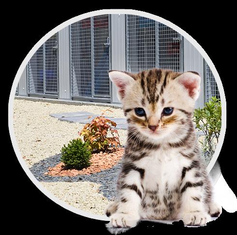 Pension pour chat en Vendée